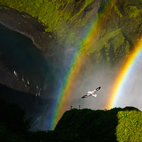 Seagull flying through double rainbow at waterfall in Iceland